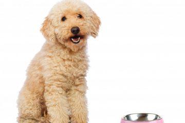 mokra hrana za pse, suha hrana za pse